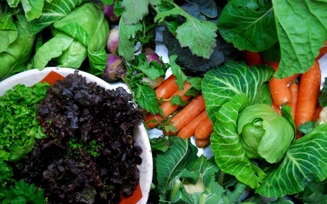 Sessão para Produtores Agrícolas: Como abastecer a Minga?