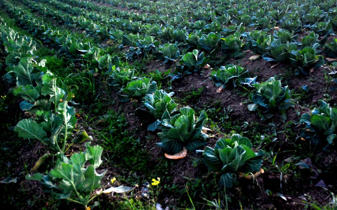 Vegetais e legumes da Minga para S. Mateus