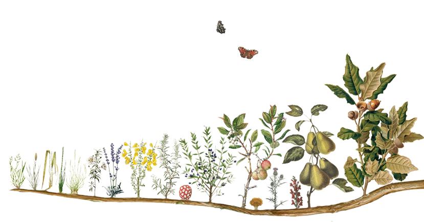 Conversa sobre regeneração de ecossistemas