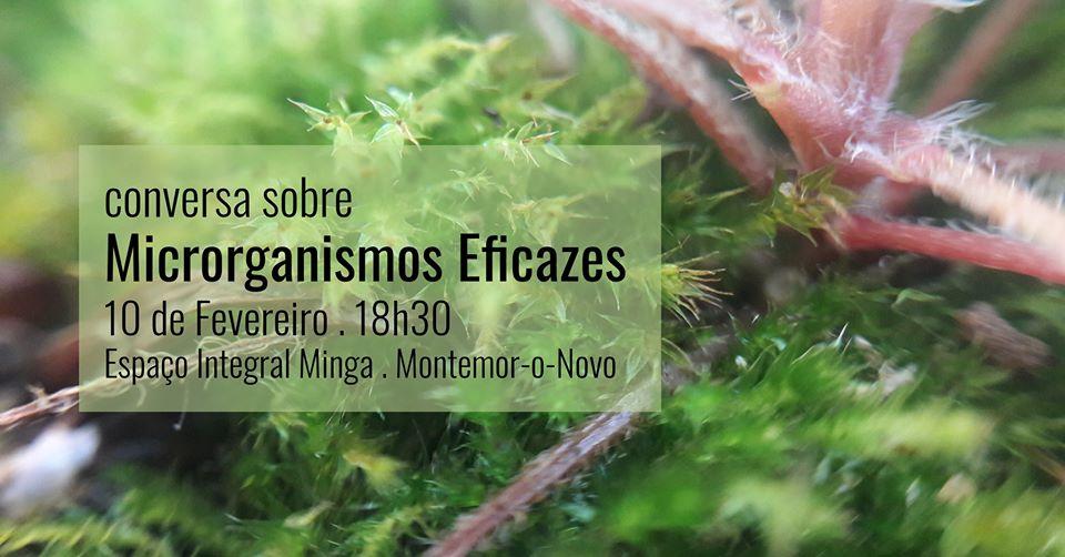 Os Microrganismos e os seus benefícios para a saúde e ambiente