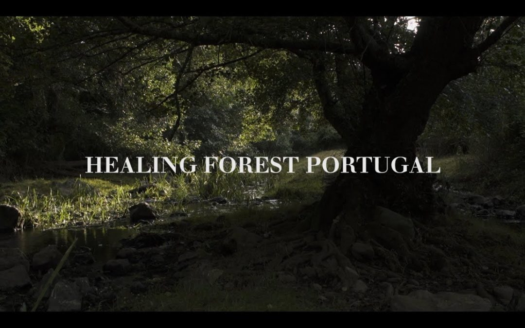 Healing Forest Portugal